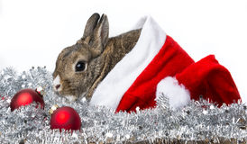 Rabbit with a red santa cap Royalty Free Stock Photo