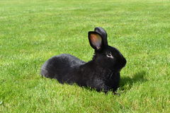 Rabbit. Relaxing on the grass Stock Images
