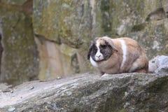 Rabbit on rock Stock Photo