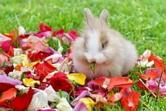 Rabbit in rose petals stock photo