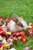 Rabbit in rose petals stock images