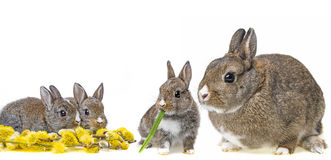 Rabbit´s familly Royalty Free Stock Image