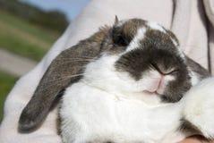 Rabbit's mouth Stock Photo