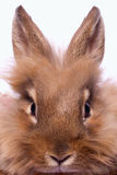 Rabbit's portrait Stock Photo