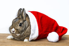 Rabbit with a santa cap Royalty Free Stock Photography