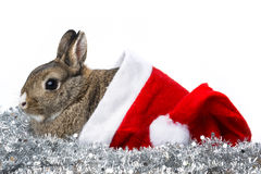 Rabbit with santa cap Royalty Free Stock Image