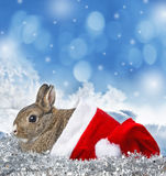 Rabbit with santa cap Stock Photo