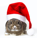 Rabbit with santa cap Royalty Free Stock Photo