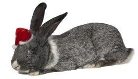 Rabbit with santa hat. Stock Photos