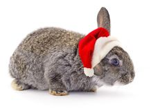 Rabbit in a Santas hat stock images