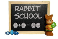 Rabbit school Stock Photo