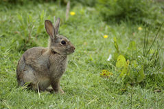 Rabbit in the woods Stock Photo