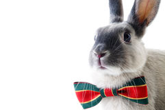 Rabbit, Royalty Free Stock Photos