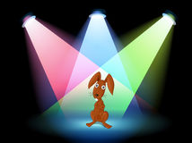 A rabbit show on stage Royalty Free Stock Images