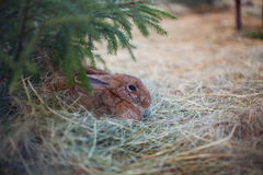 Rabbit sits in grass Stock Photo