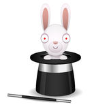Rabbit sits in hat of conjurer Royalty Free Stock Photography