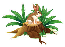 A rabbit sitting above a trunk Stock Photo