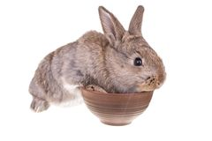 Rabbit sitting against Royalty Free Stock Images