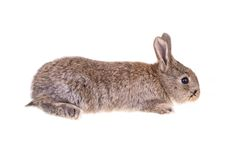 Rabbit sitting against Stock Images