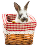 Rabbit sitting in the basket Stock Photos