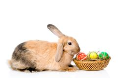 Rabbit sitting with basket easter eggs. isolated on white Stock Photos