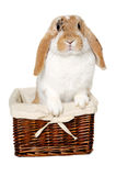 Rabbit sitting in a basket Royalty Free Stock Images