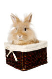 Rabbit sitting in a basket Stock Photos