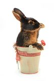 Rabbit Stock Images