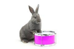 Rabbit sitting Stock Photography