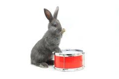 Rabbit sitting Royalty Free Stock Photo