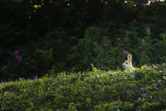 A rabbit sitting in the grass Stock Images
