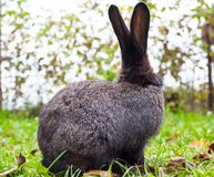 Rabbit sitting on green grass Stock Photo