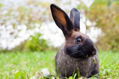 Rabbit sitting on green grass Stock Image