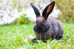 Rabbit sitting on green grass Stock Photography