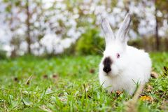 Rabbit sitting on green grass Stock Photos