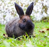 Rabbit sitting on green grass Royalty Free Stock Photo