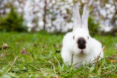 Rabbit sitting on green grass Stock Images