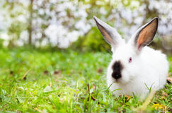 Rabbit sitting on green grass Royalty Free Stock Photos