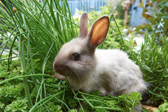 Rabbit sitting in the herbs. Pet baby rabbit eating the herbs Stock Image