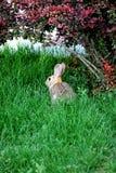 Rabbit sitting outside. Stock Photo