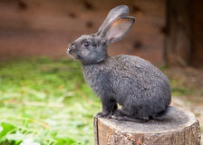 Rabbit sitting on a tree stump Stock Photos