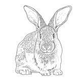 Rabbit sketch. Hand drawn vector illustration. vector illustration