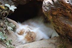 Rabbit sleeping in wildpark in Bad Mergentheim stock photos