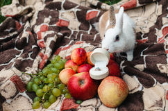 Rabbit sniffs engagement ring with a blue stone. In a white box Royalty Free Stock Images
