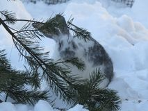 Rabbit on snow in winter stock photos