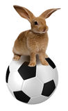 Rabbit on soccer ball Royalty Free Stock Photography