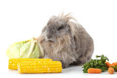 Rabbit with some vegetable isolated on white Stock Image