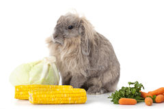 Rabbit with some vegetable over white Royalty Free Stock Images