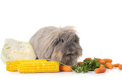 Rabbit with some vegetable  on white Royalty Free Stock Image