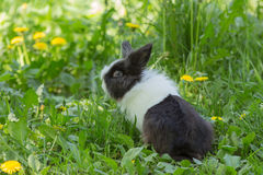 Rabbit in spring grass Royalty Free Stock Photography